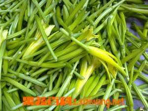 椿芽菜的营养